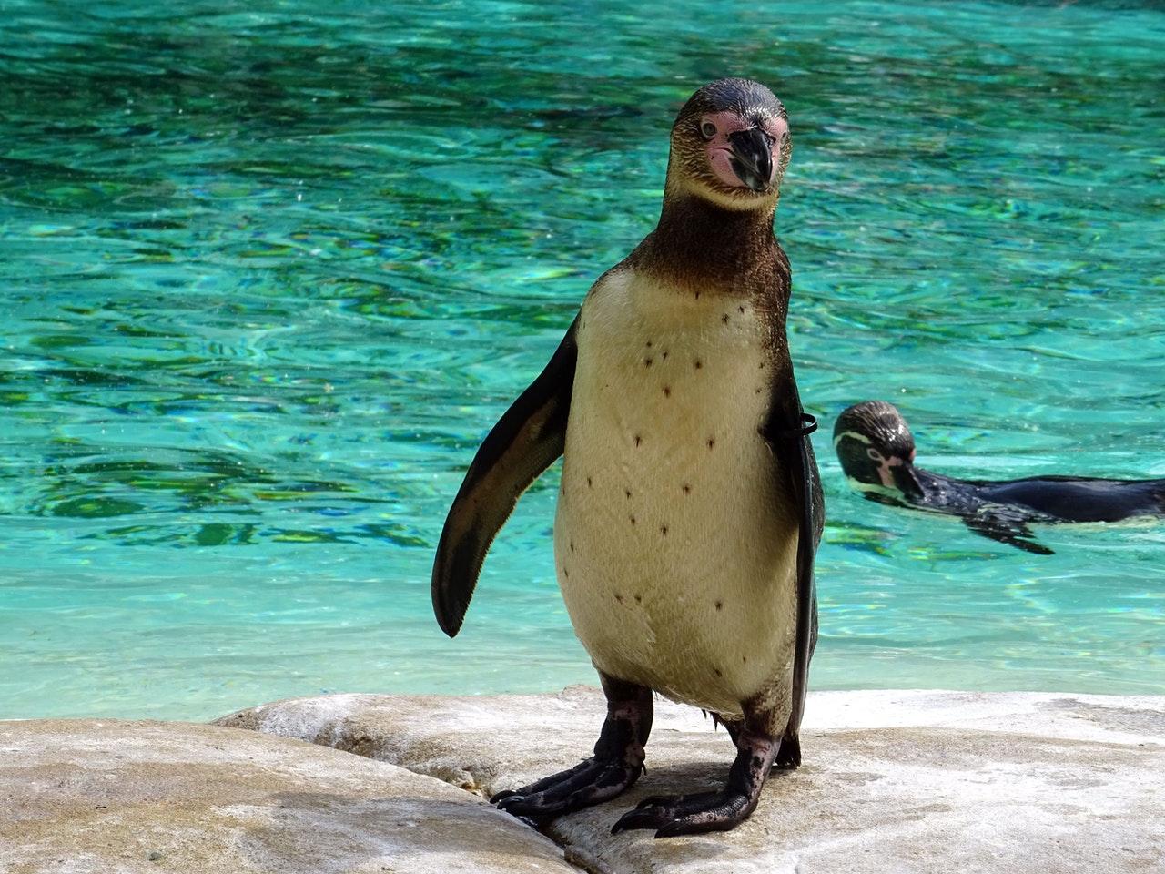 Nyheder fra Givskud Zoo
